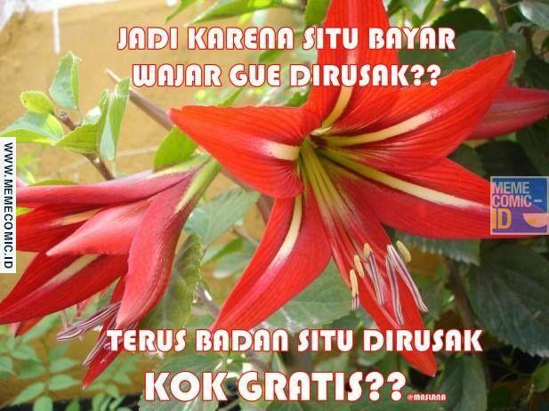 Meme Suka Suka Gue Dong Perusak Taman Bunga Amarillys 24