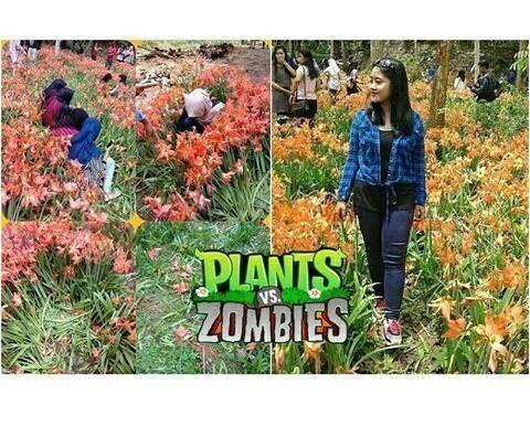 Meme Suka Suka Gue Dong Perusak Taman Bunga Amarillys 27