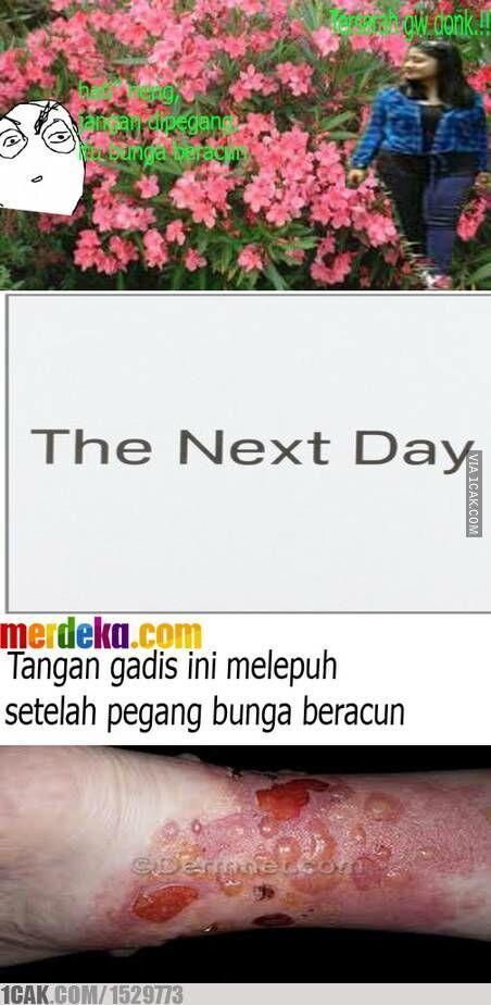 Meme Suka Suka Gue Dong Perusak Taman Bunga Amarillys 8