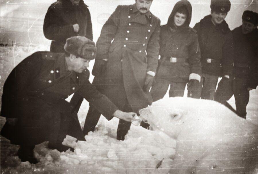Cara greget memberi makan beruang kutub
