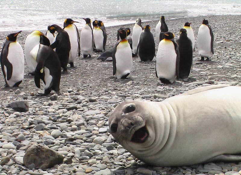 Hahaha Anjing Lautnya Nyebelin Banget Ya