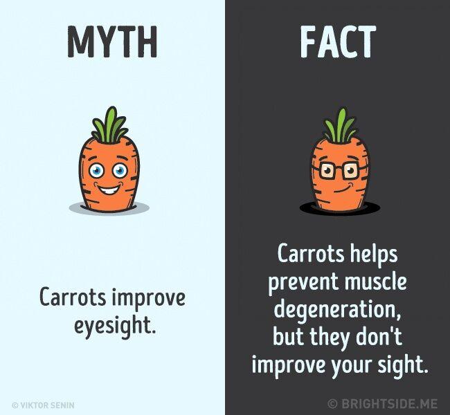 Mitos Fakta Tentang Tubuh Kita 10