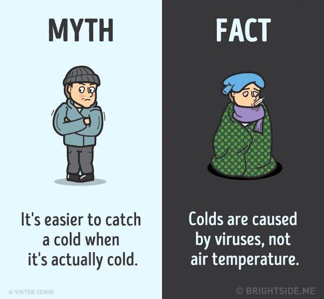 Mitos Fakta Tentang Tubuh Kita 6