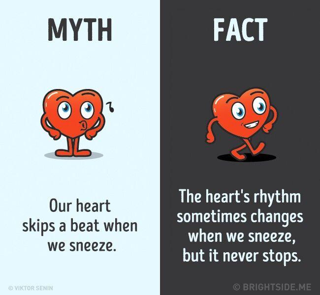 Mitos Fakta Tentang Tubuh Kita 7
