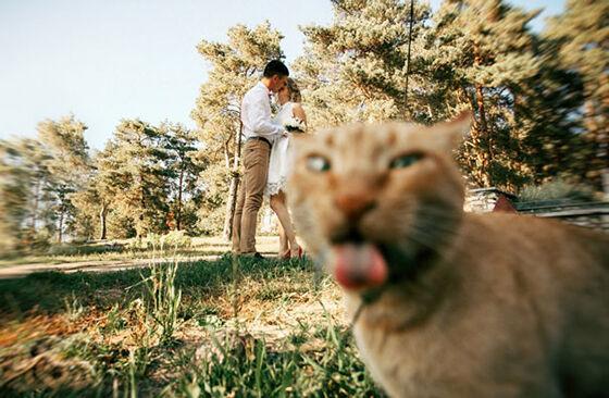 Photobomb Kucing 1