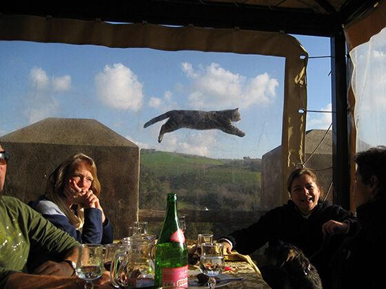 Photobomb Kucing 10