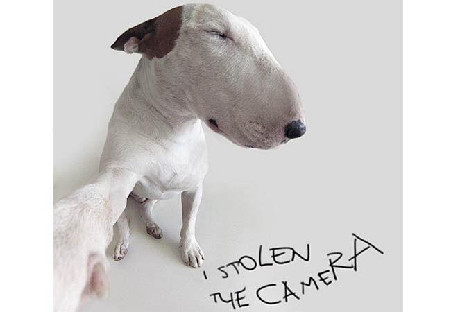 Dogfie1