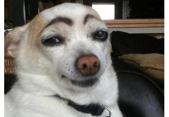 Dogfie8