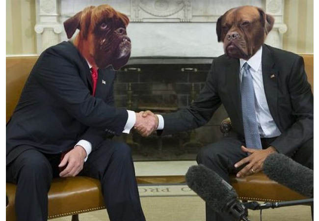 Photoshop Anjing Teranjay 3