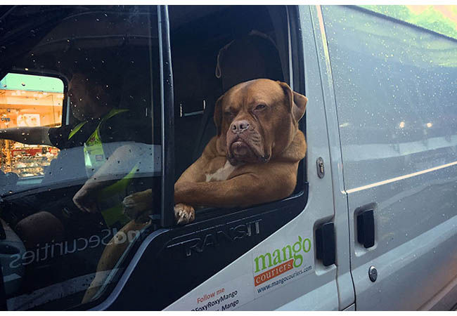 Photoshop Anjing Teranjay