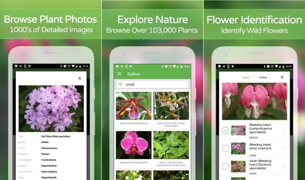 Plantsnap Identify Plants Flowers Trees More 6 5de9b