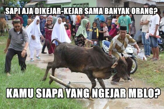 Meme Kocak Hewan Kurban 5 18b9e