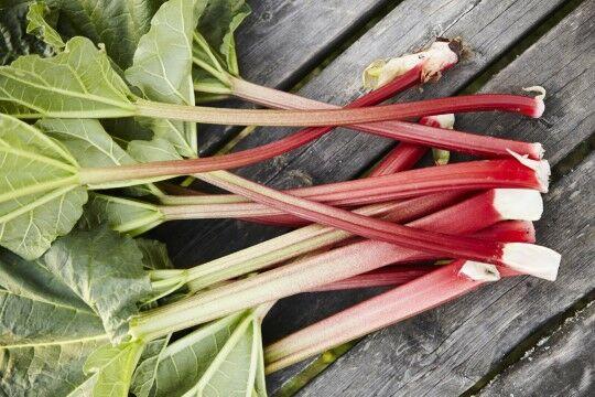 Rhubarb 3a877