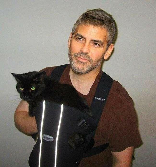 George Clooney Cat 6e0fd