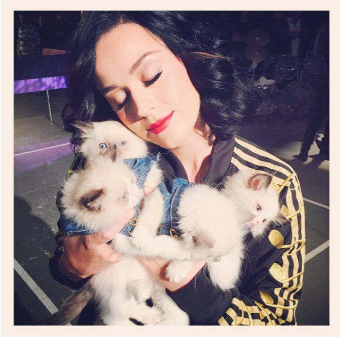 Katy Perry Kucing 971a2
