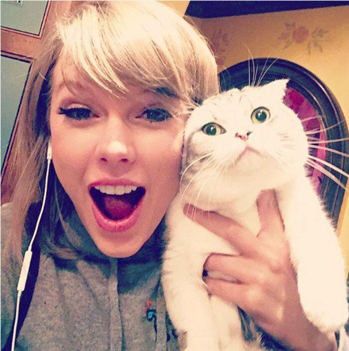 Taylor Swift Cat 5d645