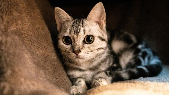 Nama Hewan Peliharaan Kucing Yang Bagus Aafba