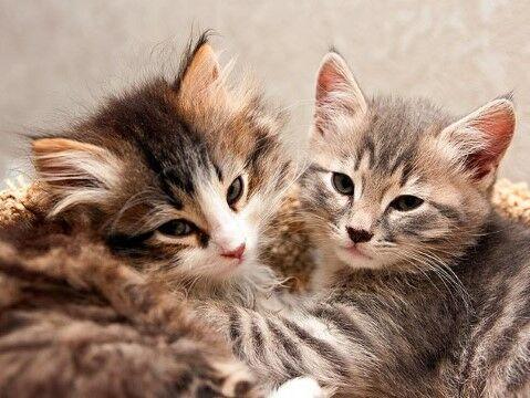 Nama Kucing Yang Lucu 29eb3