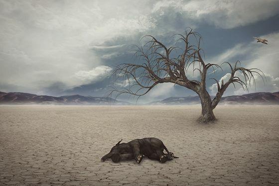 Drought 1733889 1280 3c938