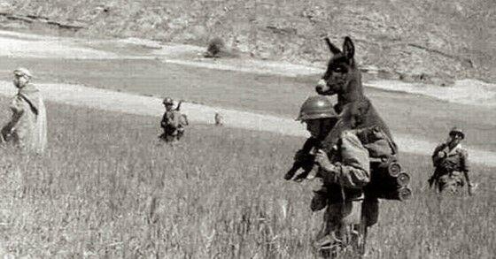 Tentara Dan Keledai A76fb