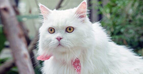 Nama Kucing Lucu 5 6d7c2