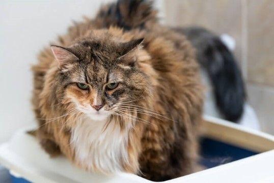 Nama Kucing Lucu 6 1a305