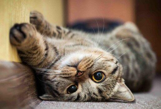 1000 Nama Kucing Lucu 98fb4