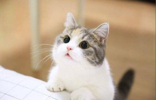 Nama Kucing Lucu Dan Artinya 77445