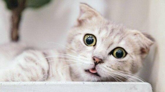 Nama Kucing Lucu Laki Laki Aba1c