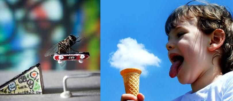 15 Foto Super Kocak Tanpa Sentuhan Photoshop, Nomer 5 Jangan Dilihat!