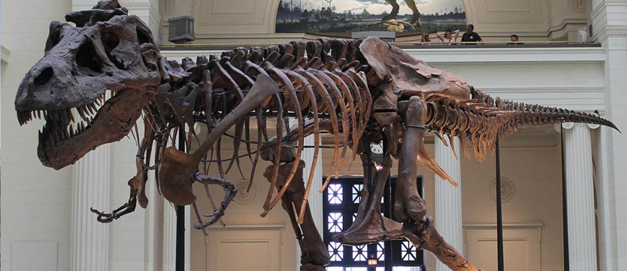 Fosil Dinosaurus Terbesar Di Bumi 84c7b