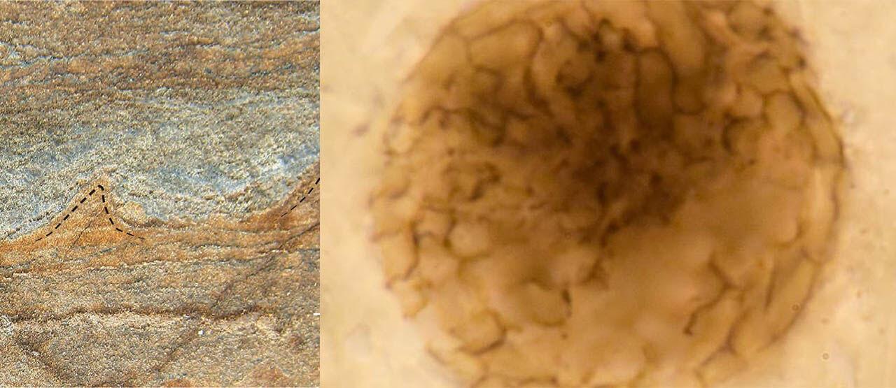 Penemuan Fosil Di Argentina E5413