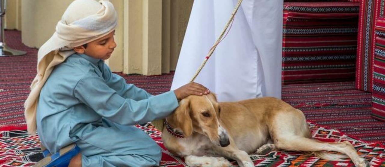 Anjing Arab Saudi 31ae7