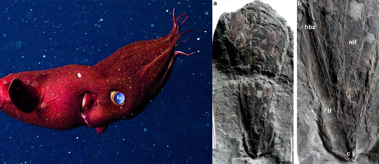 Penemuan Fosil Cumi Cumi Purba 9f18e