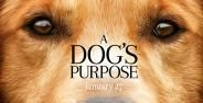 A Dogs Purpose Banner