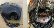 Anglerfish Ikan Aneh 1 Bb0e7