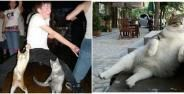 Potret Kucing Bertingkah Seperti Manusia Banner 6e43f