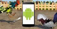 Cara Adu Ayam Di Android