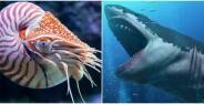 Fosil Megalodon Dan Hewan Purba Ditemukan Di Sukabumi Banner 4926e