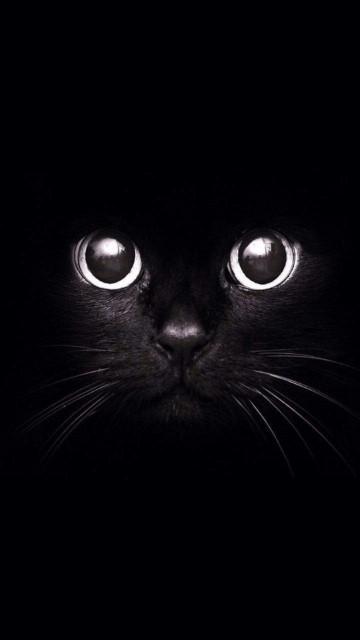 wallpaper keren hitam kucing large dfab3.jpg