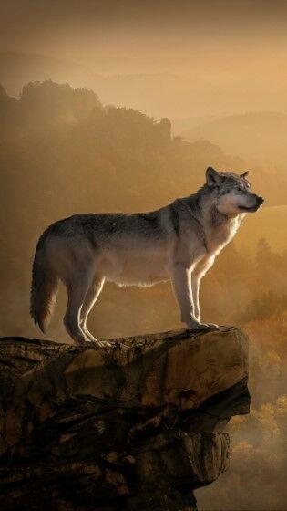 Wolf Custom C0087