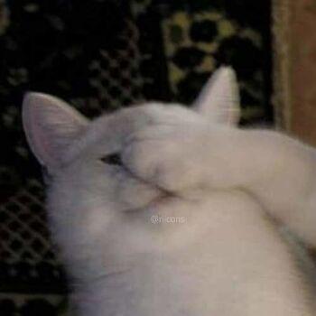 Foto Profil WA Couple Cat 1 D3206