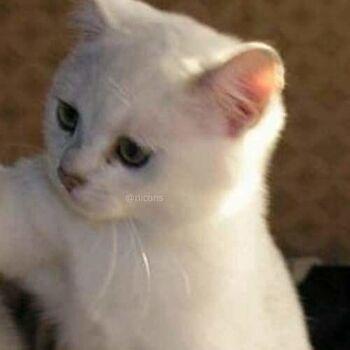 Foto Profil WA Couple Cat 2 80ac4