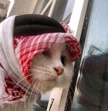 Nama Nama Kucing Islam Bcf66