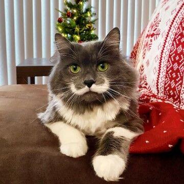 Hamilton The Hipster Cat 93c4f