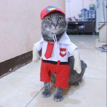 1000 Nama Kucing Lucu 3f2c6