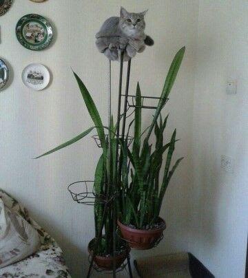 Kelakuan Kucing Yang Bikin Ketawa D7982