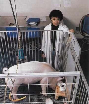 Peneliti Dan Babi 1a8b4