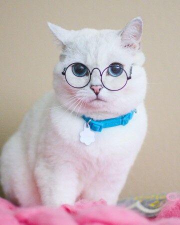 White Coffee Cat 057c6