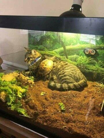 Kucing Lucu Sekali D51da